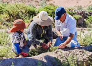 Agriultura en el Desierto